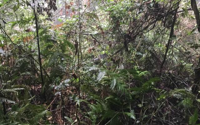 Bwindi Gorilla Tracking H-Group