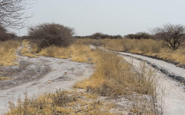 Autofahren Botswana Tipps Geschwindigkeit CKGR