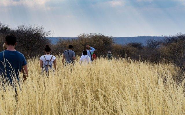 Waterberg Plateau Rhino Drive zu Fuss durch Savanne