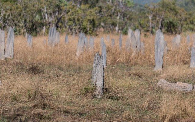 Flache Magnetic Termite Mounds Litchfield NP