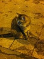 Canim Cigerim: Leber liebende Katze als Stammgast