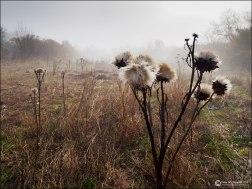 Cardos entre la niebla