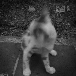 Gatos orgullosos (VII)