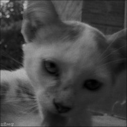 Gatos orgullosos (III)
