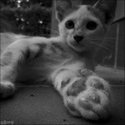 Gatos orgullosos (IV)