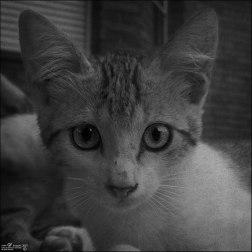 Gatos orgullosos (V)