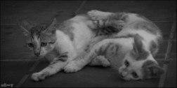 Gatos orgullosos (VI)