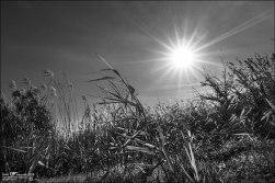 Sol de otoño (III)