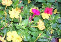 flori pe strada mea