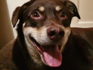 Cine și de ce fură câini care au proprietar?