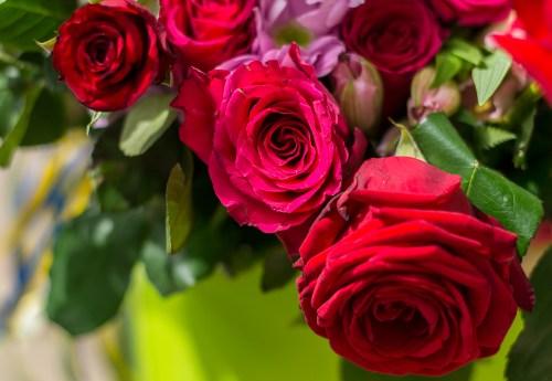 red-roses-1920-dsc_7586
