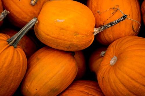 dsc_2065-1920-pumpkins-vienhoang-com