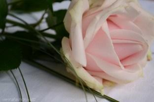 14 Rose
