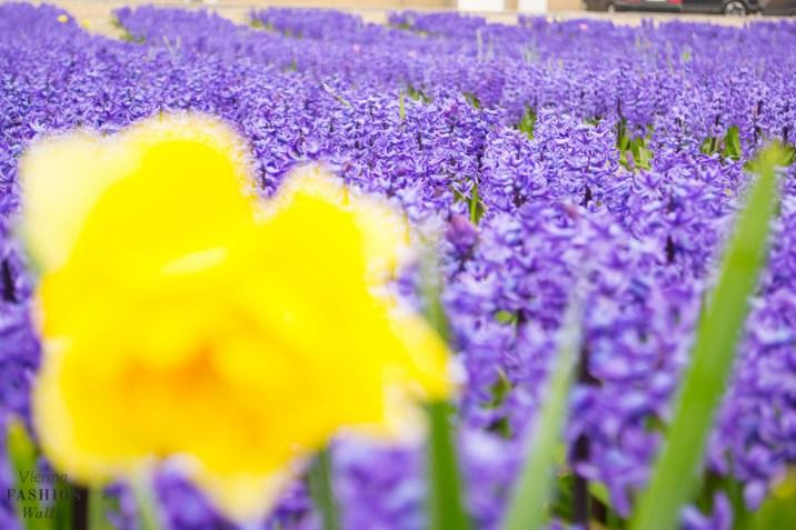Travel Amsterdam Lifestyleblog www.ViennaFashionWaltz.com Wien Österreich Austria (55 von 72)