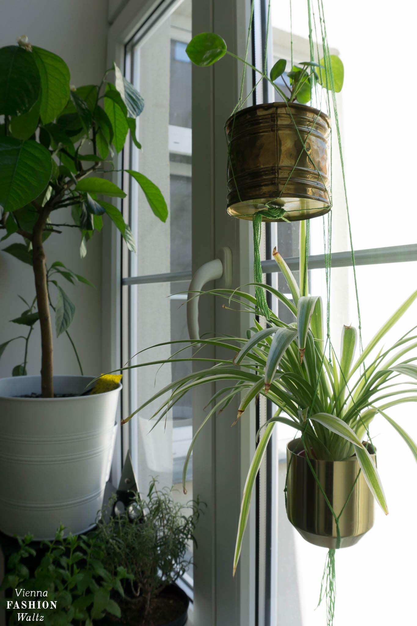 Pflanzenfenster, Urban Jungle, Pflanzen an die Wand hängen - DIY Inddor Garden - Urban Jungle- Pflanzen, Blumentopf www.viennafashionwaltz.com (44 von 75)