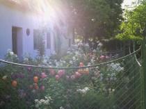 Garden in Niedersulz