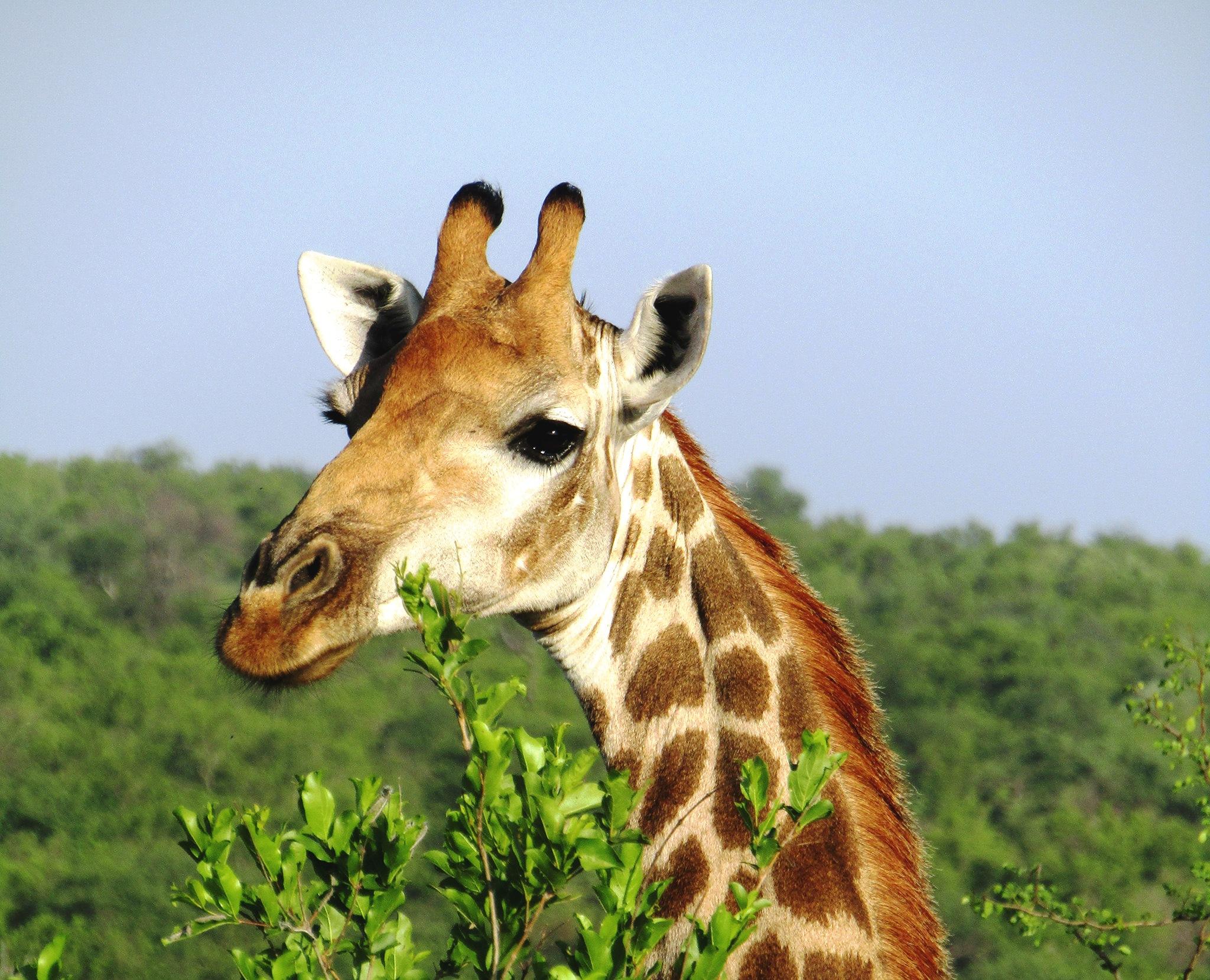 Animal parc Kruger