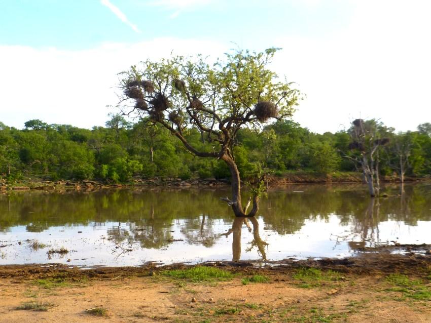 Paysage réserve d'Afrique du Sud