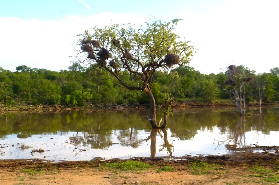 Mini safari au Parc Kruger