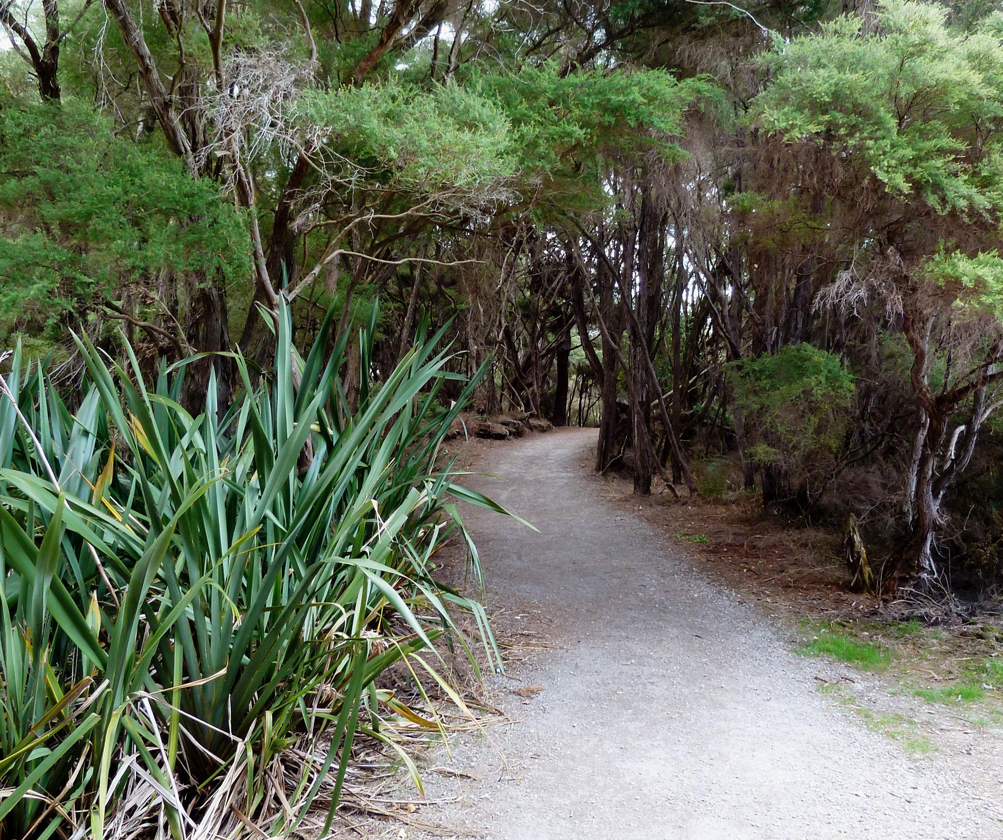 Sentier en bordure du lac de Rotorua en Nouvelle-Zélande