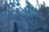 Incendio forestal al sur de Bogotá habría sido causado por un indigente