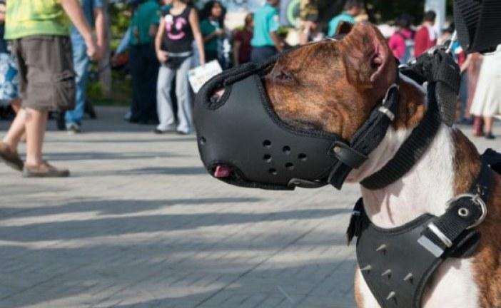 En promedio, cada hora son atacados dos ciudadanos por perros en Bogotá