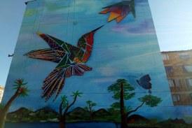 Un colibrí vuela en San Cristóbal