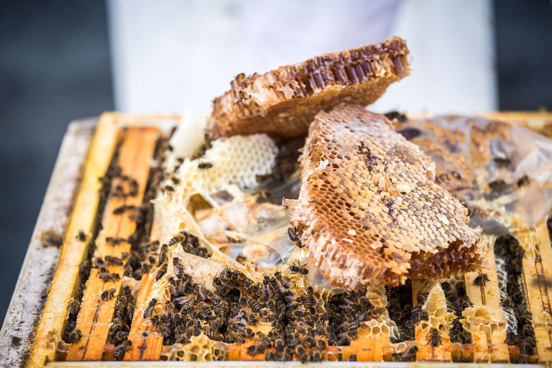 viertel-vor-stadtbienen-erika-mayr-photo-marcus-werner-35