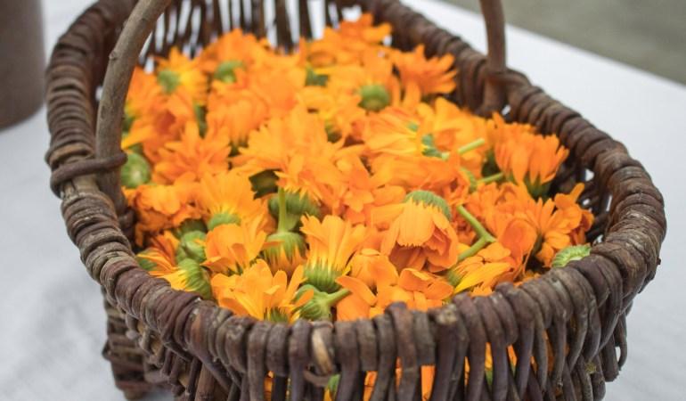 Wie kommt die Bio-Blüte in die Body-Butter? Mit Weleda zu Besuch beim Calendula-Anbau