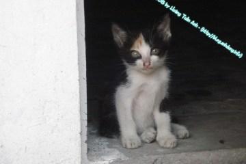 Cái Tết của Mèo Con