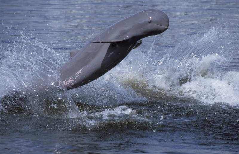 CAMBODIA KAYAKING TOUR FOR IRRAWADDY FRESHWATER DOLPHINS