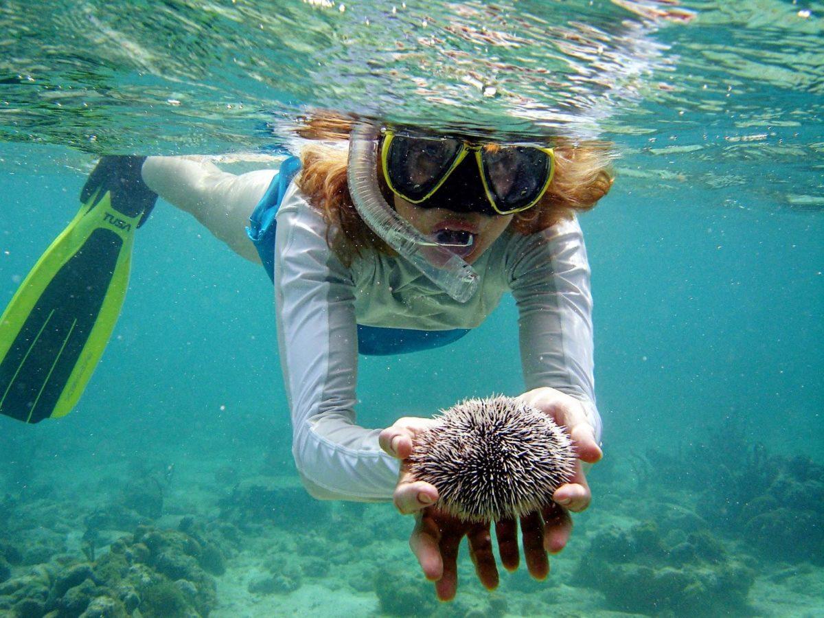Image result for snorkeling