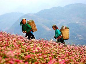 Northern Vietnam Adventure Trekking Tour to Mai Chau, Sapa, Hagiang, Cao Bang