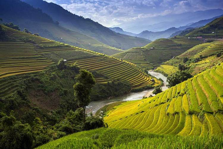 Rice fields next to a river