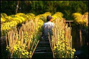 Sa Dec Flower Garden 1 300x200 - SA DEC FLOWERS GARDEN