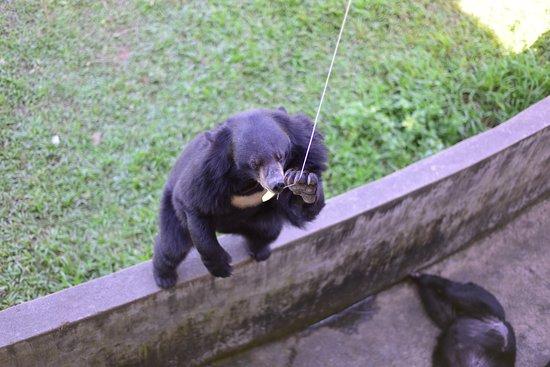 Янг Бэй Кормление медведей с удочки