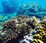 Южные острова VIP – посещение 4-х лучших островов