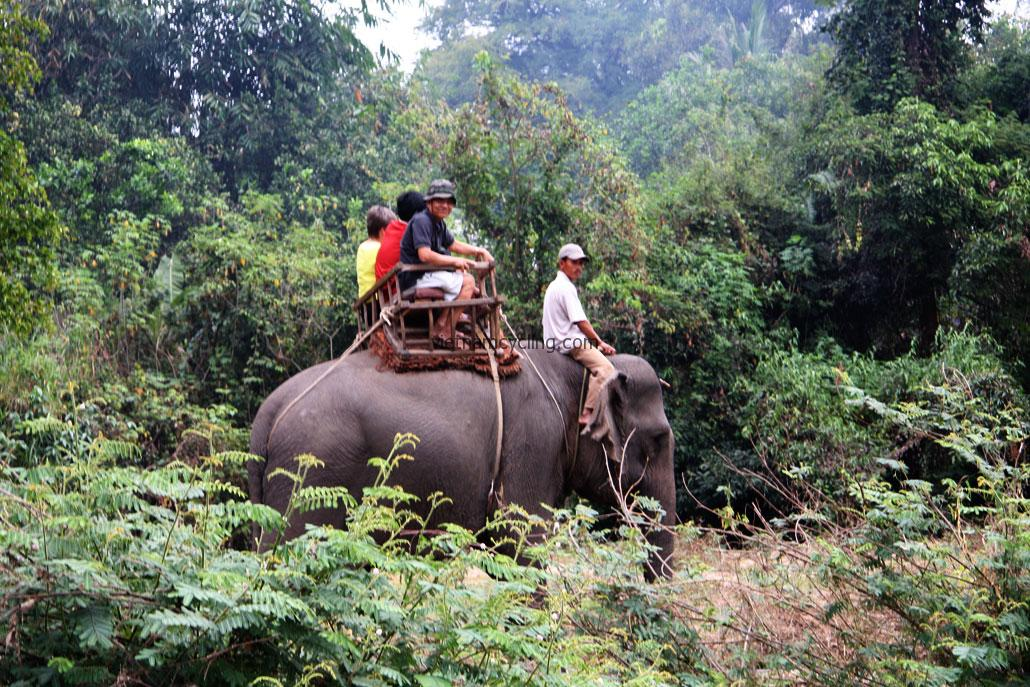 buon ma thuot elephant ride