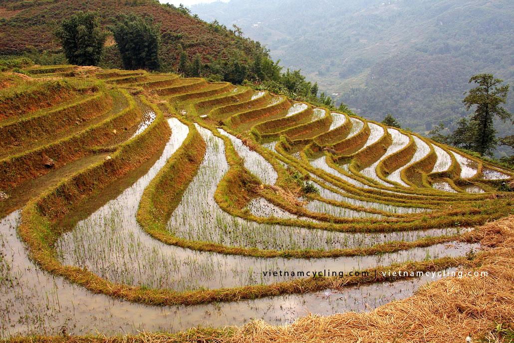 rice terrace sapa vietnam