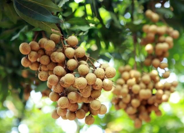 Đại sứ Việt Nam tại Úc và Thương vụ làm việc với Bộ Nông nghiệp Úc về các vấn đề thương mại song phương, trao đổi việc mở cửa quả nhãn