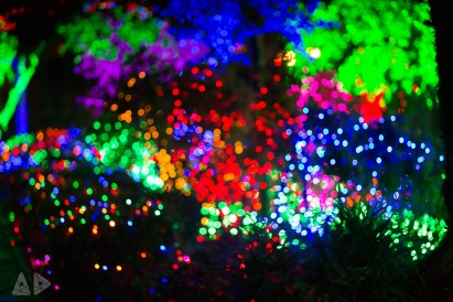 Christmas-Lights-7.jpg