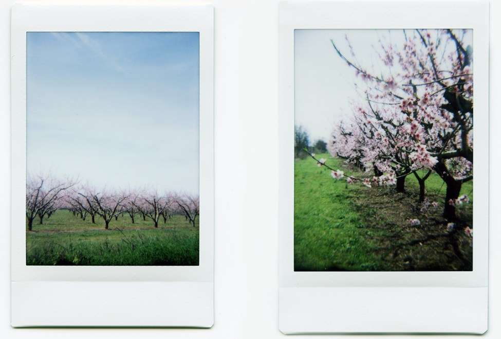 Fuji Instax with Diana F+ back
