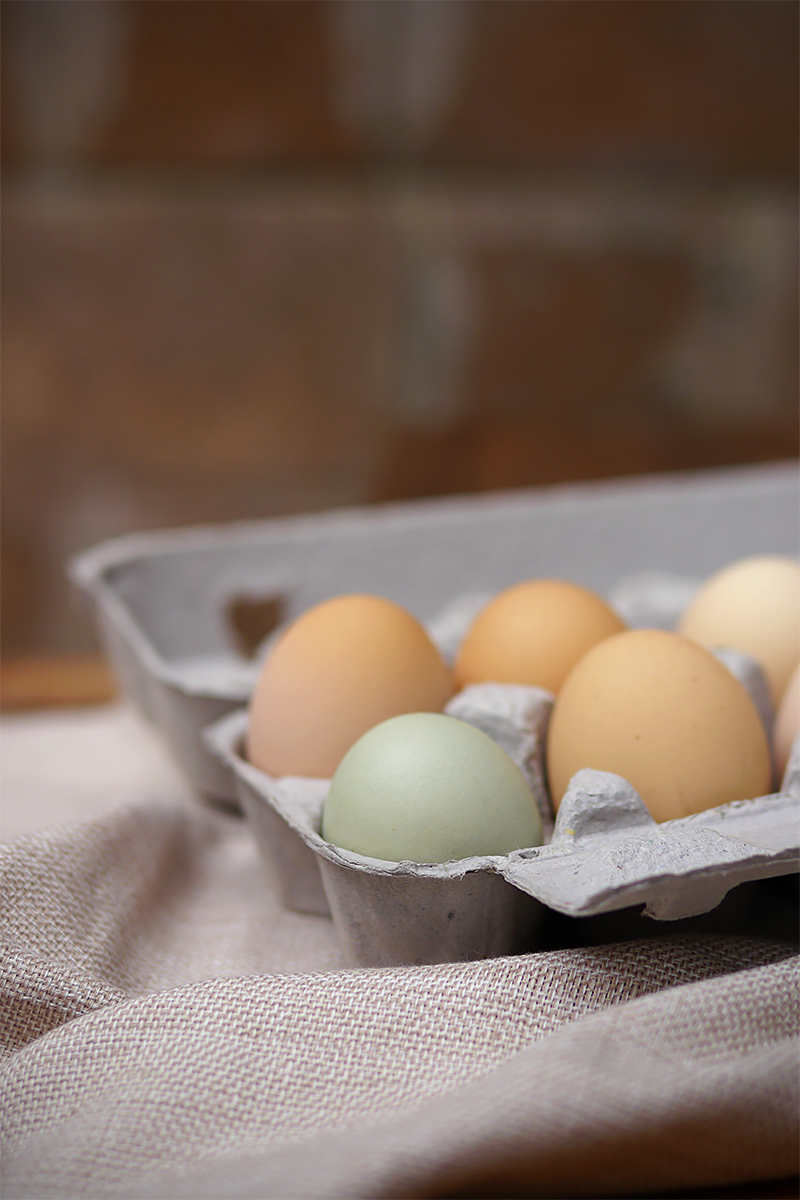 P1110775_eggV