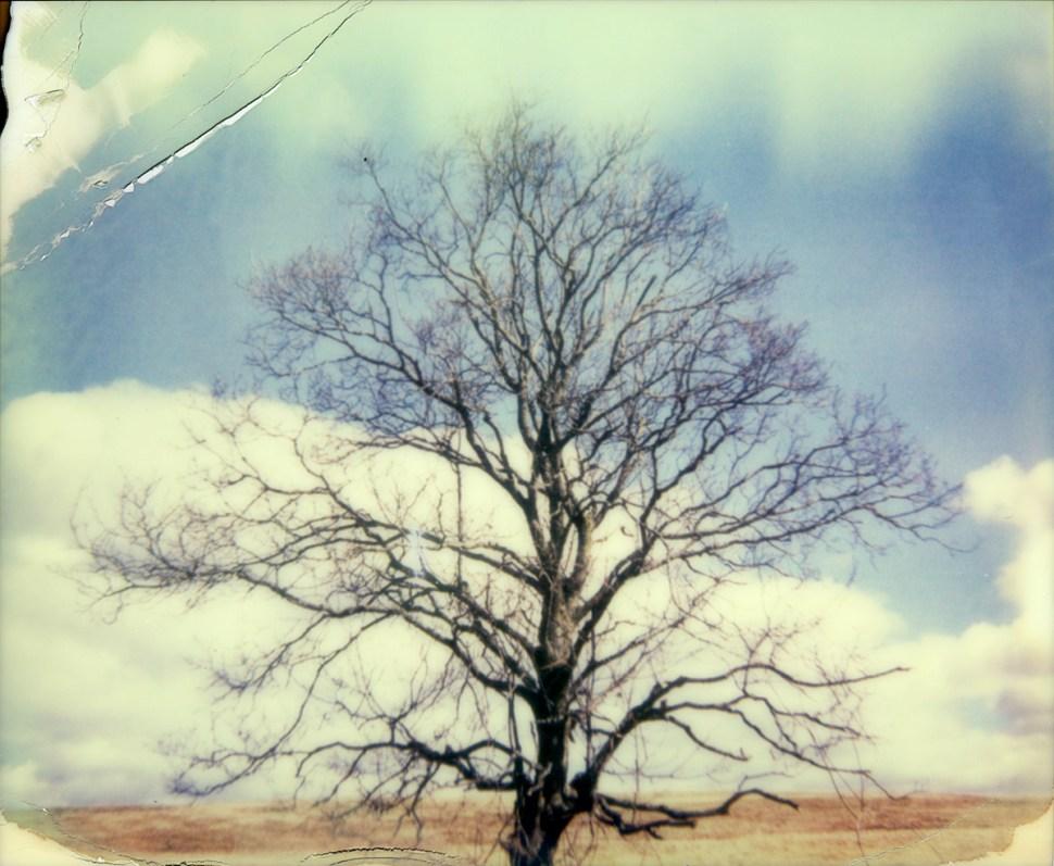 painterly tree by nikki gardner