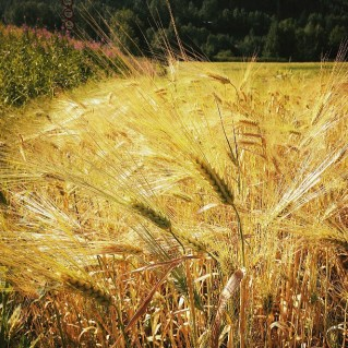 July/August: Fertile and alive