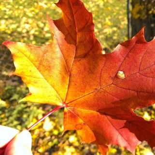September/October: Melancholic beauty