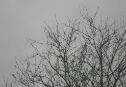 The tree stood stark against the clouds