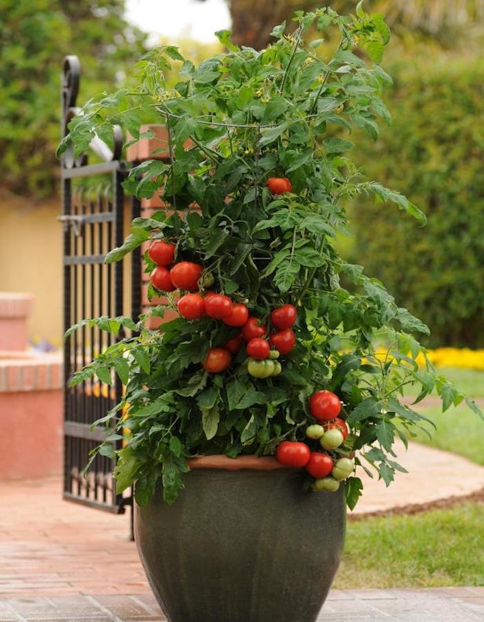 This image has an empty alt attribute; its file name is Home-Slice-Patio-Tomato.jpeg