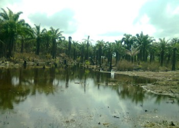 Environmental Rights Group Disagrees with Shell on Remediation of Ikarama Spill Site