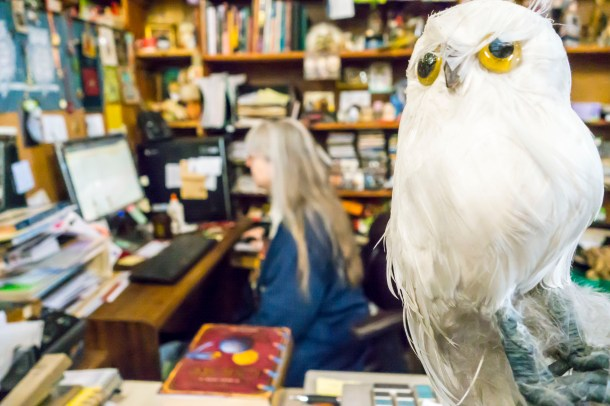 """Dianne Thi Nguyen / staff photographer barney bee: The original owl that keeps watch over The Downtowne Bookstore, named """"Barney Bee"""" in 2003."""